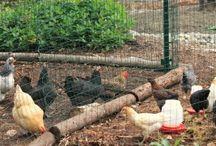 Chickens and stuff / by ReGina Shuler