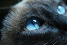 Foto gatti