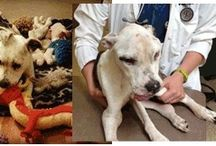Justice for Puppy Doe/ Kiya / Give this Baby girl justice from her abusers!