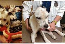 Take Action for Animals Sake