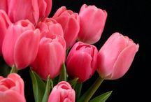 Virág jelentése