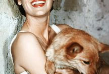 Dogs of Hollywood / Hollywood Film Stars with their Dogs