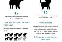 "Dental Care / Did you know that 4 out of 5 dogs show signs of gum disease?  It is called the ""Silent Killer"" because it can lead to fatal conditions."