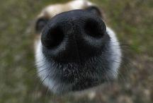 5 mitów na temat psów...