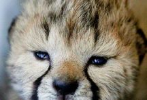 Wild Animals and How cute are they