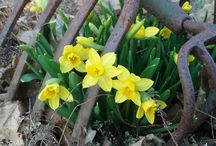 Весна идет, весне дорогу