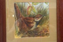 Wildlife Paintings by Frances Blake / Wildlife Paintings by Frances Blake, collection of my work for sale