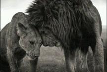 Animales favoritos / Seres que dan lecciones.