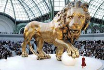Lions domain