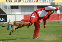 RING (sport canin)