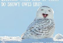 Bird Memes / We love a good bird joke just as much as the next person!