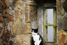 коты и окна