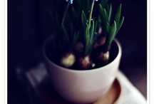 Greens: flowers, plants, etc.