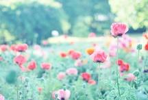 flower★2
