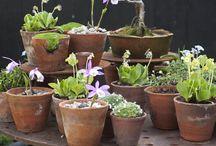 Trädgård - Gardening