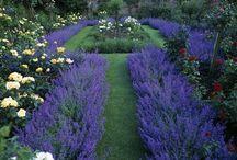 Gardening / by Jennifer Walcutt Perdue