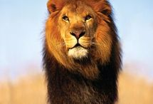 King of the Jungle  / by Ellen Johnson