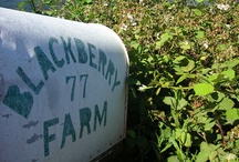 blackberry farm. / by cindylitwin