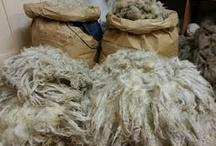 Ruwe wol / pure wol van schapen in onbewerkte vorm