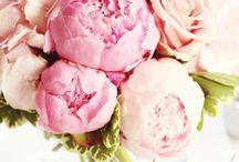 |flowers|
