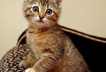 so cute ..