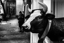 The Best of Black & White Photography / The best examples of B&W Photography from around the world. #photography #B&W #Noir