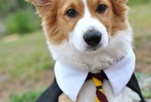 I NEED a puppy!!