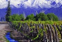 Vineyards / Wineries