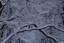 Winter wonderland!!! Love the LOOK OF SNOW