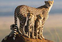 Animals Rock