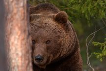 Bears  / by Chris B