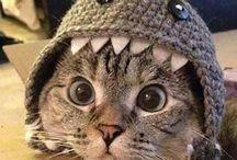katten, die ik leuk vind... / katten, die ik leuk vind...