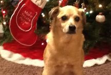 12 Pets of Christmas- Photo Contest WINNERS! / In December, we held a photo contest, 3 photos chosen per day for 12 days of Christmas, and 2 GRAND PRIZE winners, through our Facebook page. Please enjoy these photos of all of our winners!!