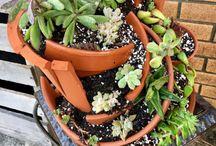 Surprising Succulents