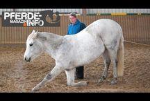 Pferde Zirkuslektionen