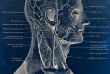 The human body & health / by Samantha Mair-Donaldson