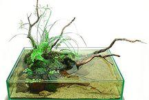 Wabi Kusa / Vízinövények levegőre szoktatva, azaz mi történik ha egyes akváriumban tartott növényektöl megvonjuk a víz alatti létet és csökkenő párás közegben tartva hozzászoktatjuk a levegőn létezéshez.