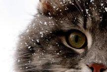 Cute - Gatos