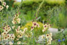Beetpläne, Gartengestaltung