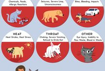 Pet Safety Infographics!