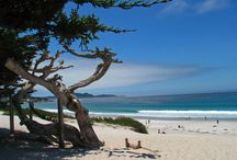 Carmel California / by Coachmans Inn