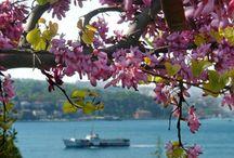 İstanbul Boğazı ve Erguvan