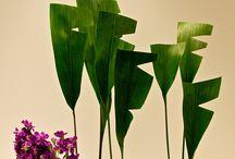 Leaf manupilation