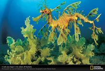 The Sea / Natural things from the oceans and seas of the earth.