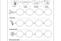 Teaching ecology