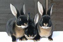 bunny<3