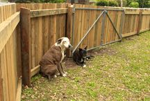 Dog Fences / Fencescape Fencing supplies and installs Dog fencing. learn more about dog fences on the Fencescape website: http://fencescape.com.au/dog-fences/