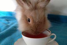 Datemi un coniglietto ....