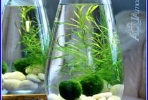 WATER PLANTS IN VASES