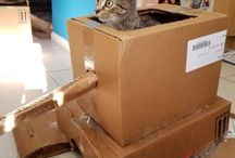 Cardboard projects for Cats